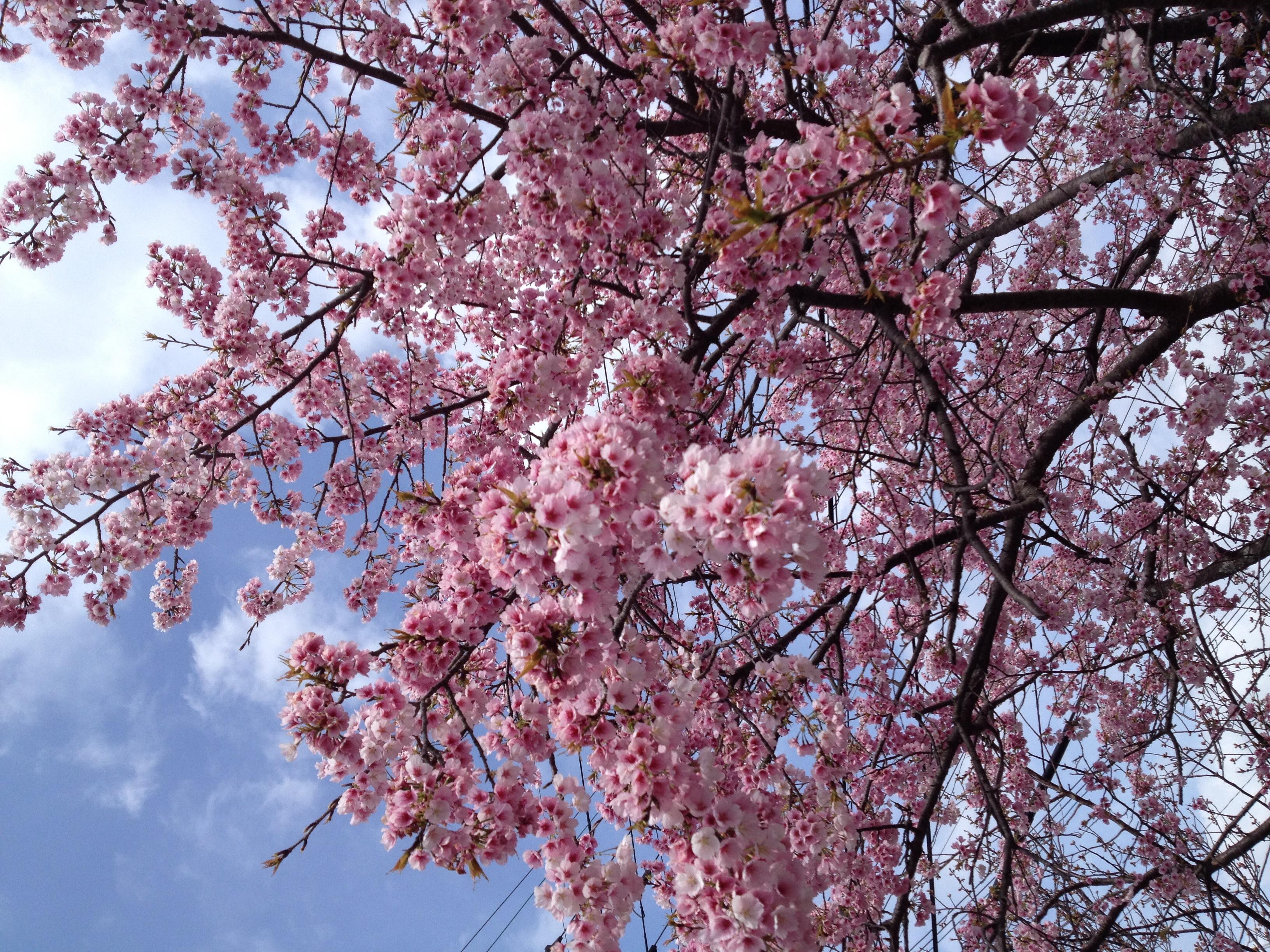 春の感謝セールです。